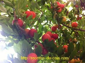 confiture prune (3)