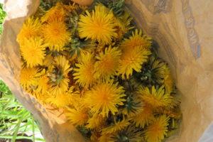 Confiture fleurs pissenlits