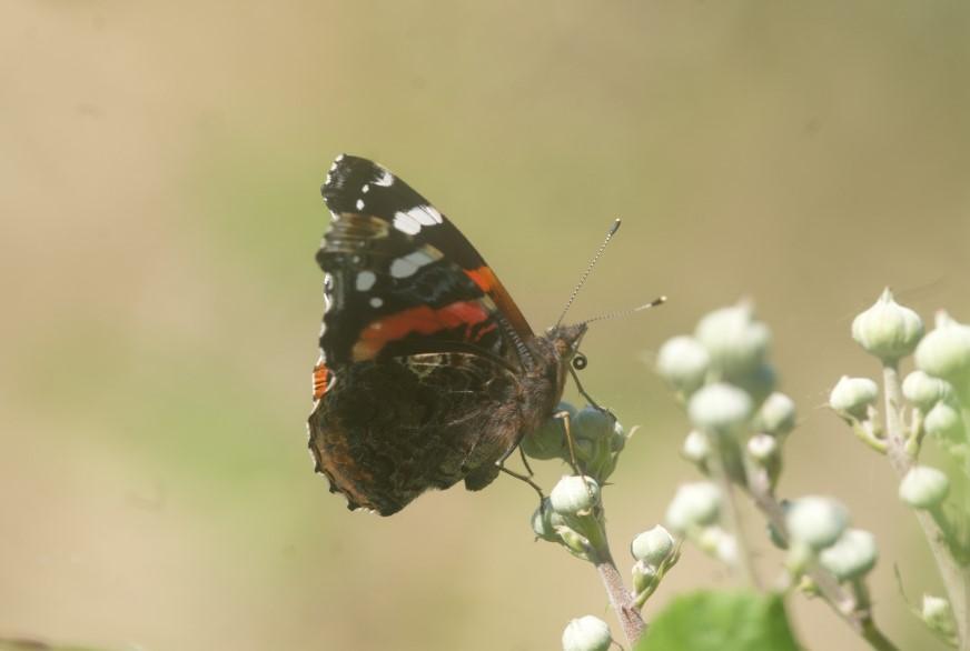 Papillon Le 24 mai 2020 Blanquefort